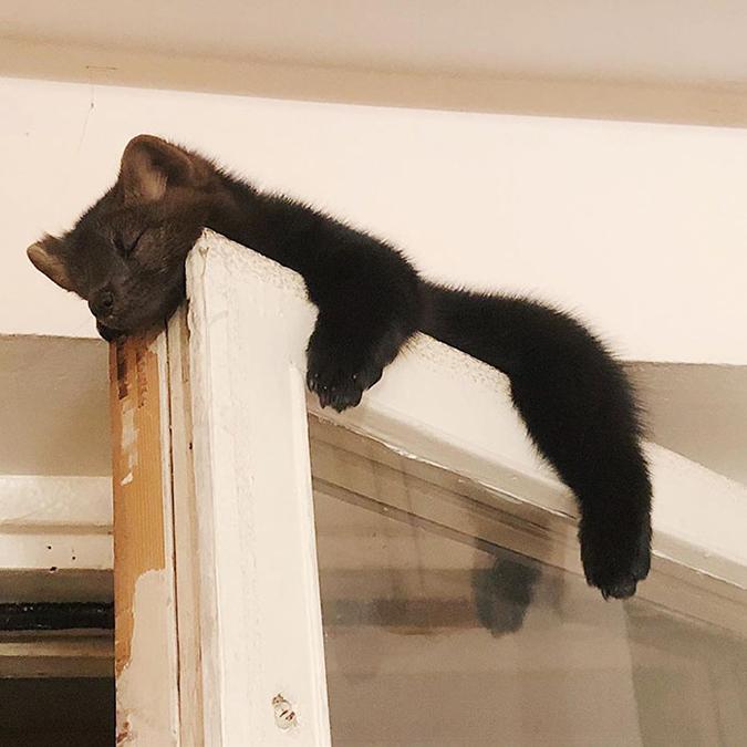 Umora sleeps at the top of a door