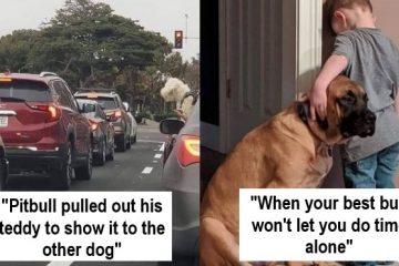 Uplifting Dog