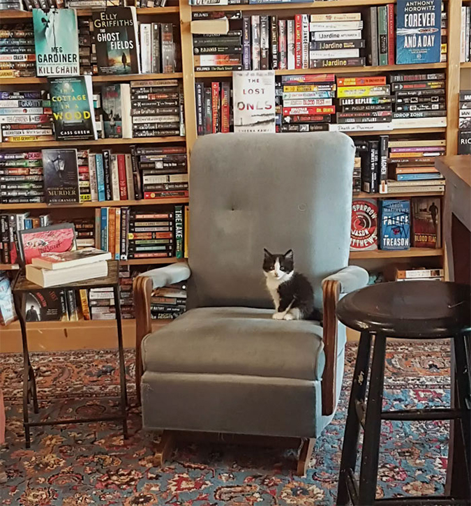 a black and white kitten sits on a chair at a canadian bookstore