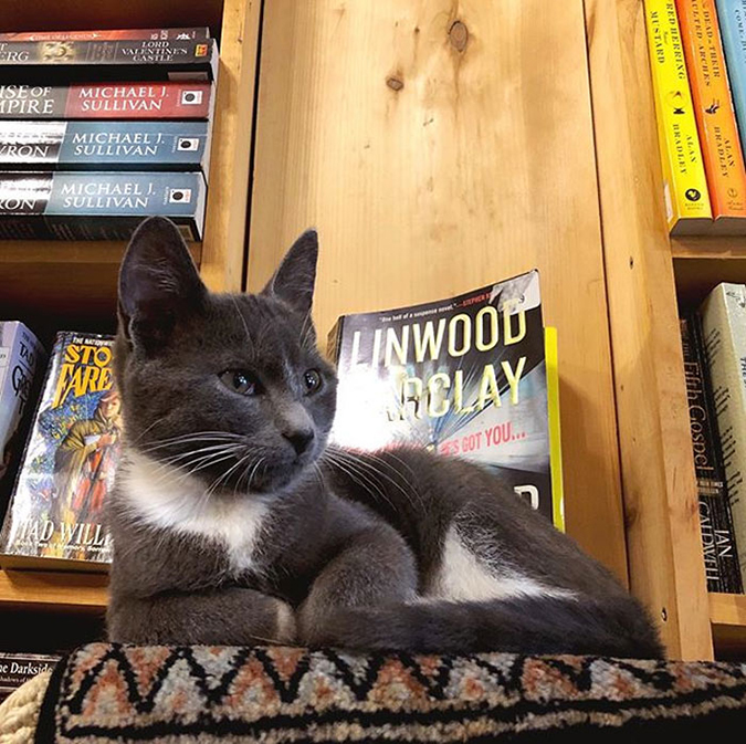 a cat curls up near the displayed books in the bookstore