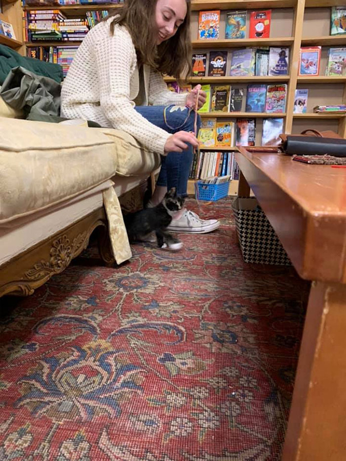 a lady plays with the kittens in the bookstore