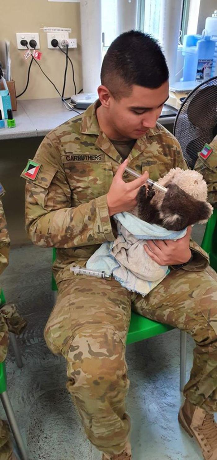 australian soldier feeding rescued koalas