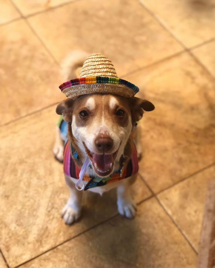 bailey in a cheery mexican outfit