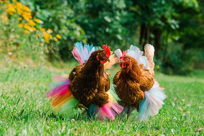 ballerina skirts for hens
