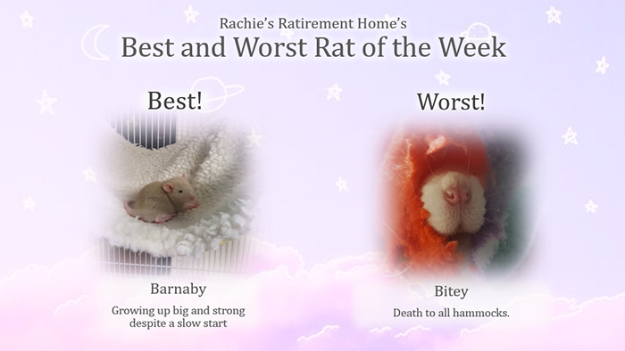 barney and bitey