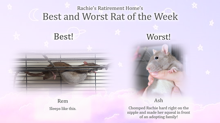 best and worst rat for january 2020