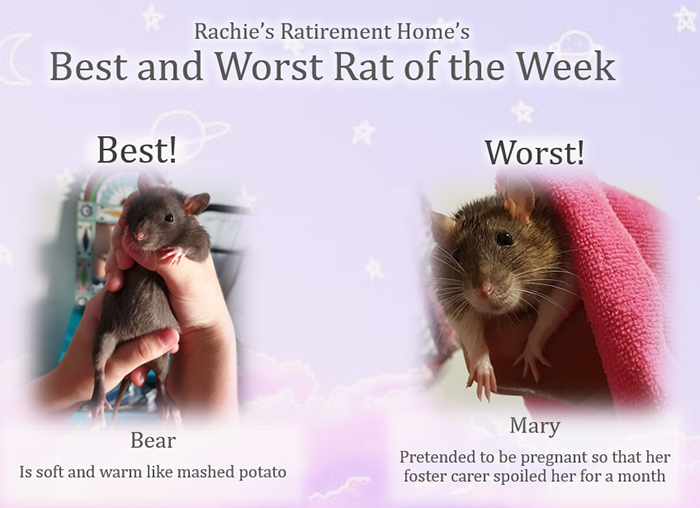 best and worst rat for march 2019