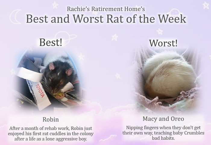 best and worst rat of the week for first week of september 2018