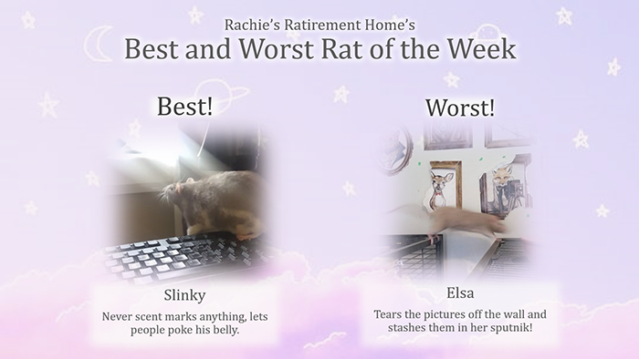 best and worst rat of the week for second week of august 2018