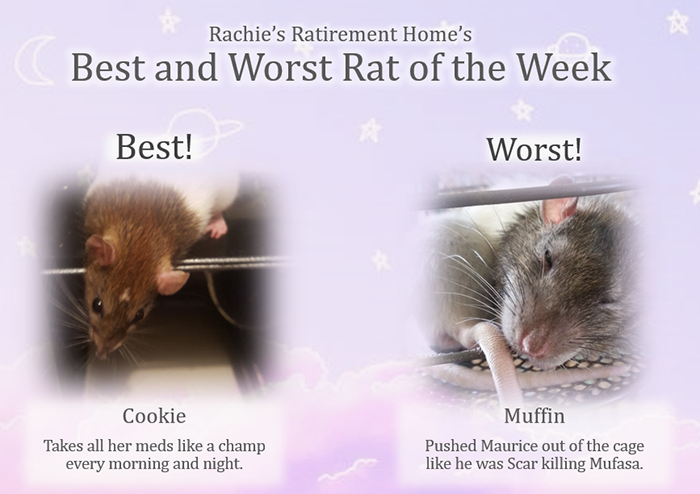 best and worst rat of the week for second week of september 2018
