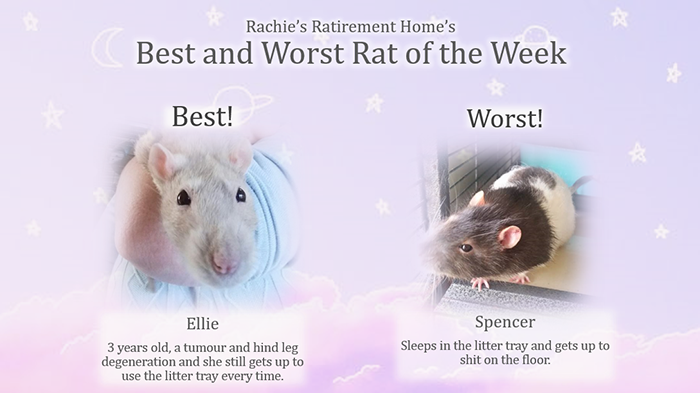 best and worst rat of the week for third week of august 2018