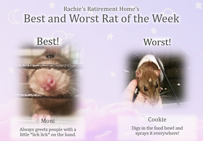 best and worst rat of the week for third week of september 2018