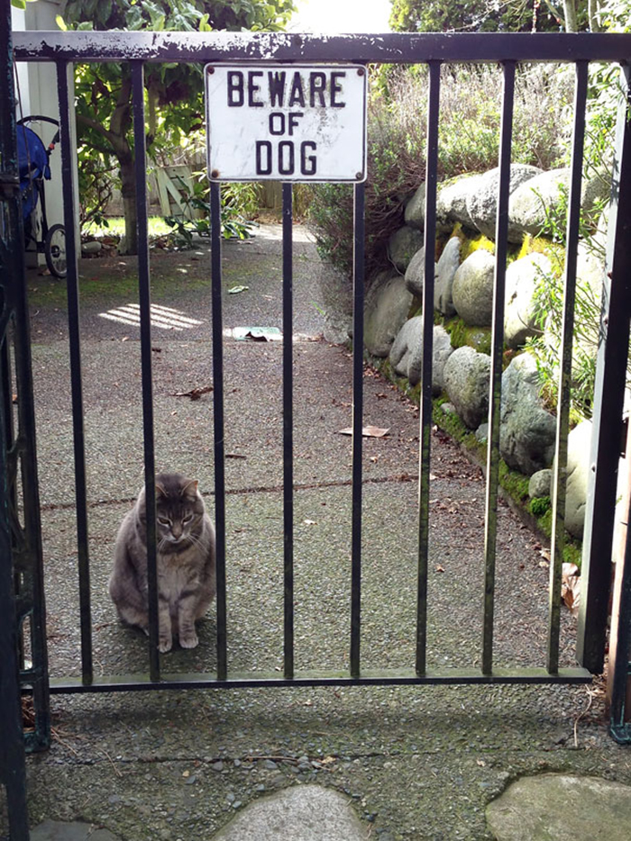 beware of dog cat