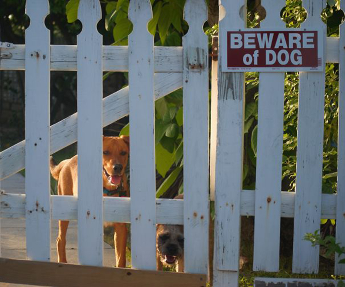 beware of dog cute guards