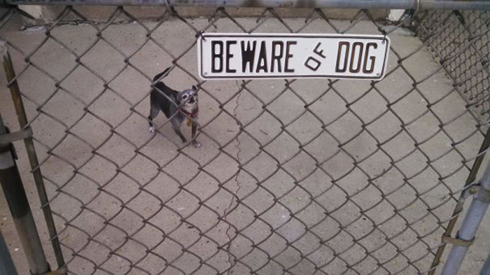 beware of dog cute puppy