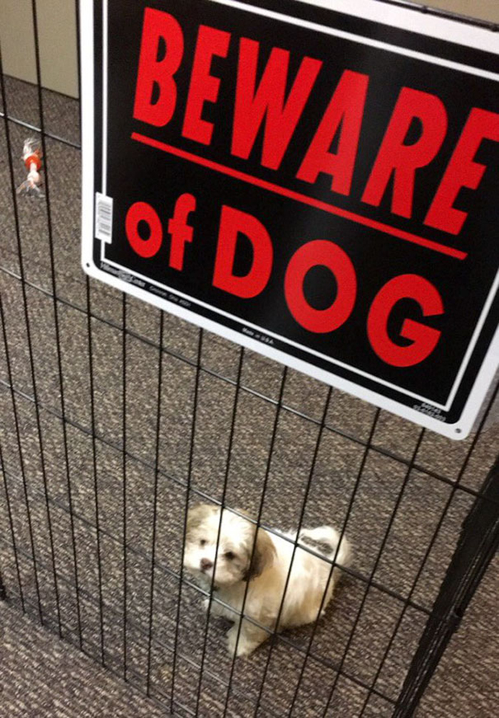 beware of dog puppy