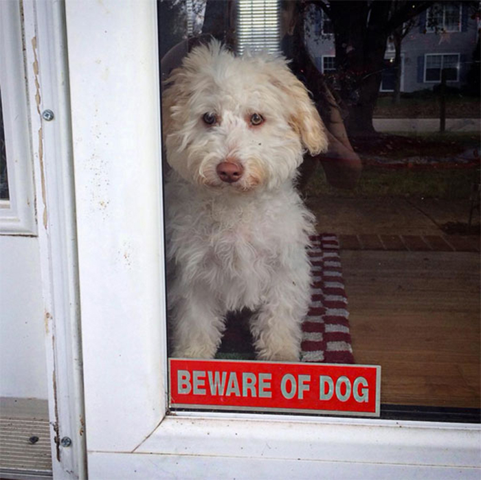 beware of dog sign door
