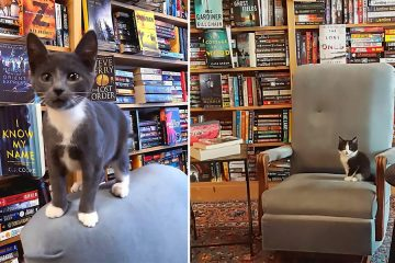 bookstore kittens