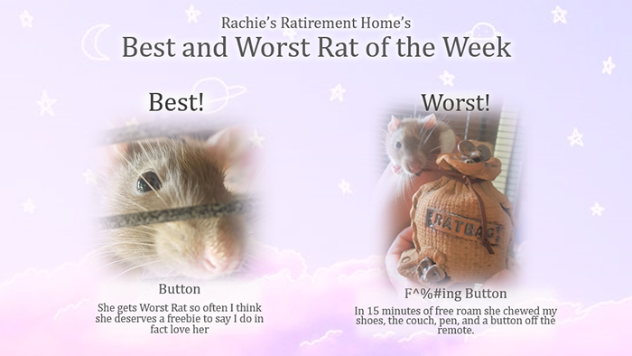 button is simultaneously the best and worst rat