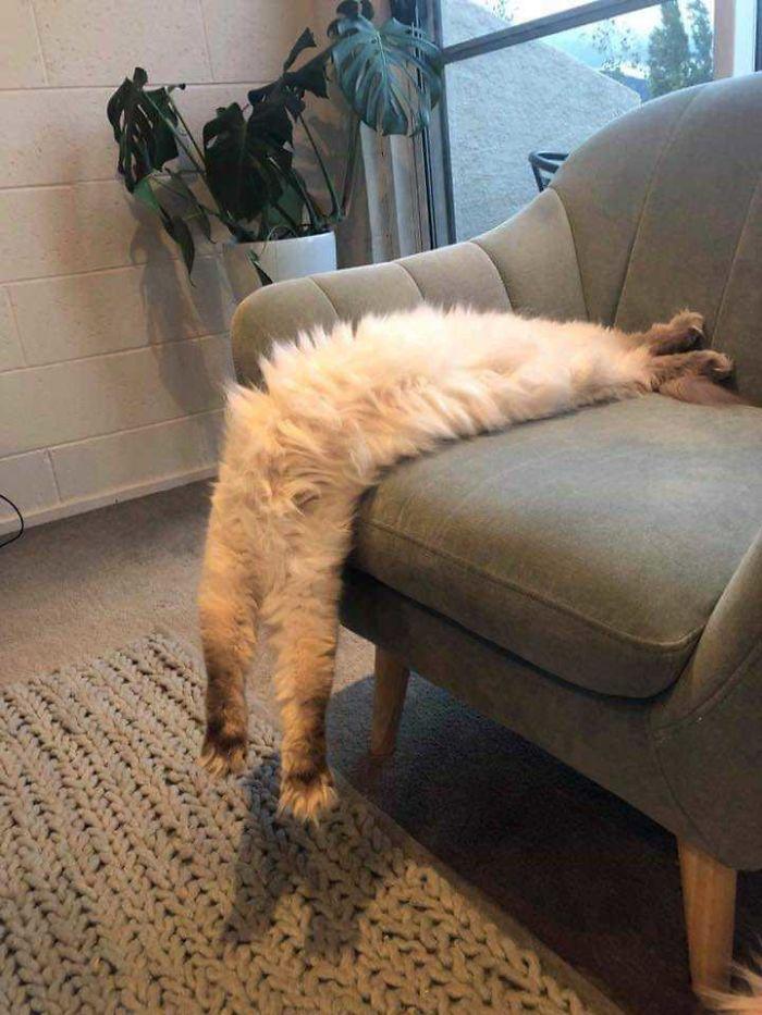cats stretching salvador vali