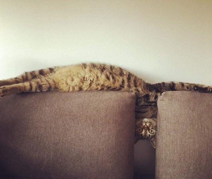 cats stretching tetris