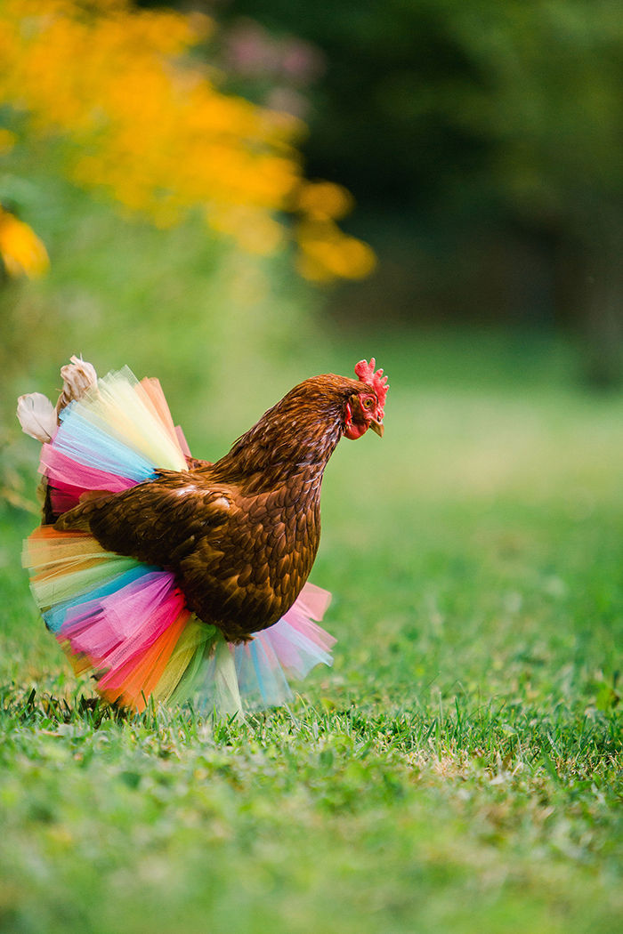 chicken tutus neon rainbow colors