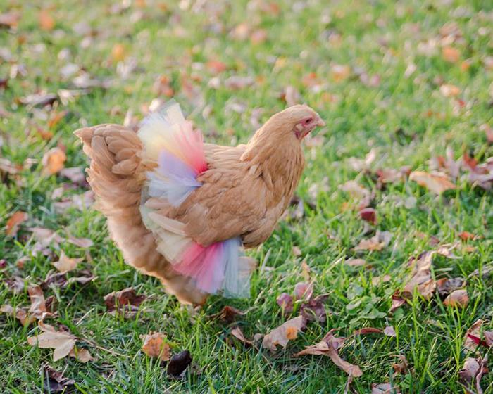 chicken tutus pastel rainbow