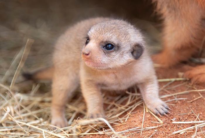 cute newborn pup zoo miami
