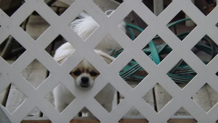 cute pup peeking from the fence