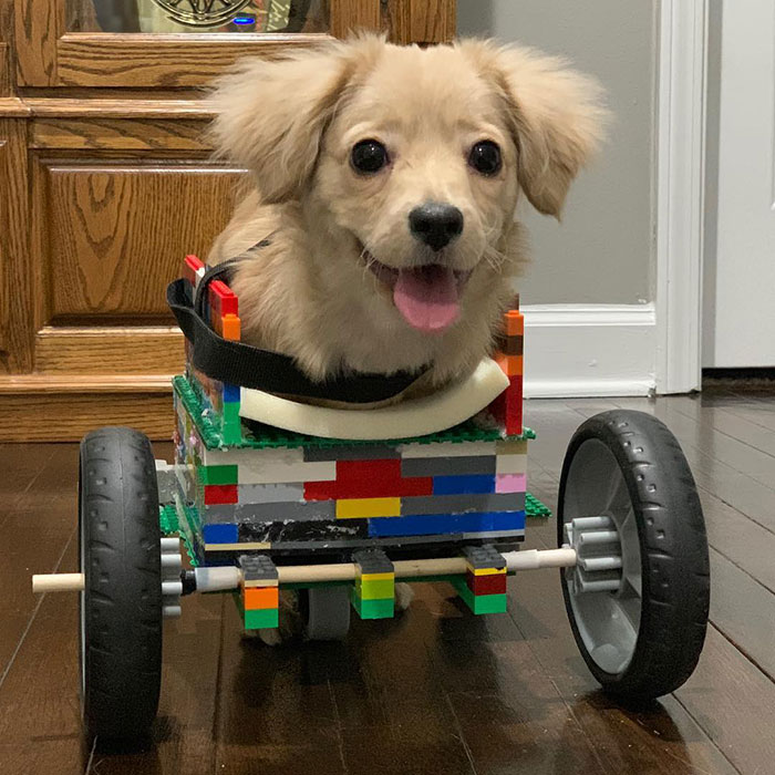 disabled puppy walks with lego wheelchair
