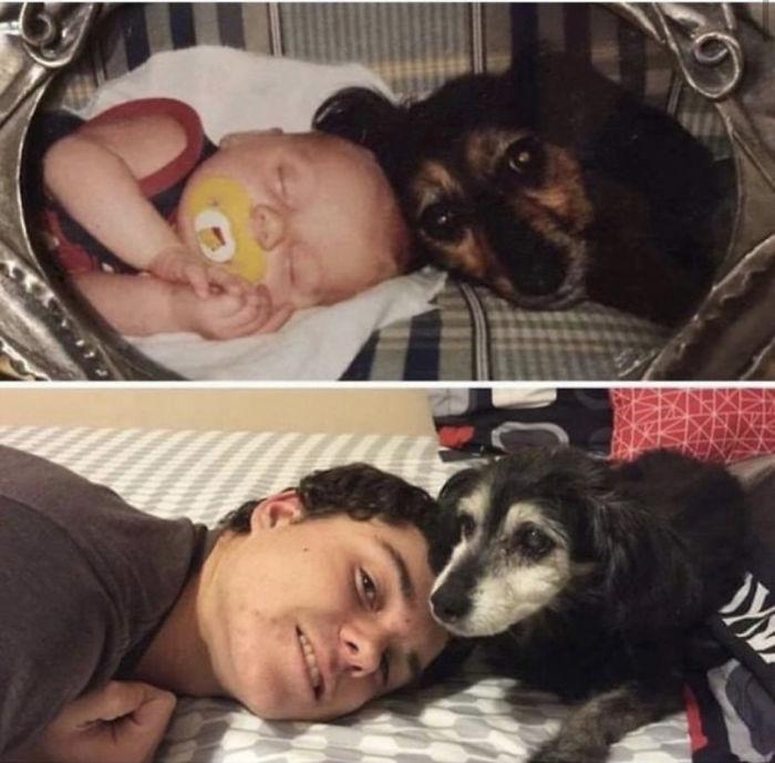 dog child friendship