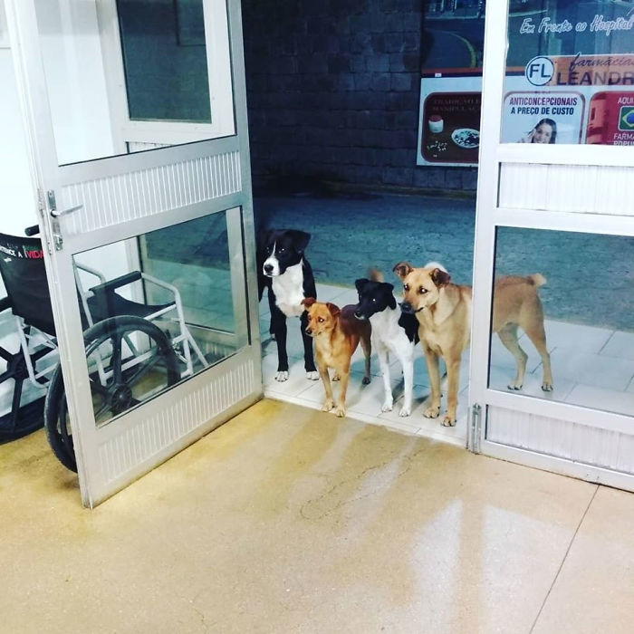 dog friends waiting for homeless man