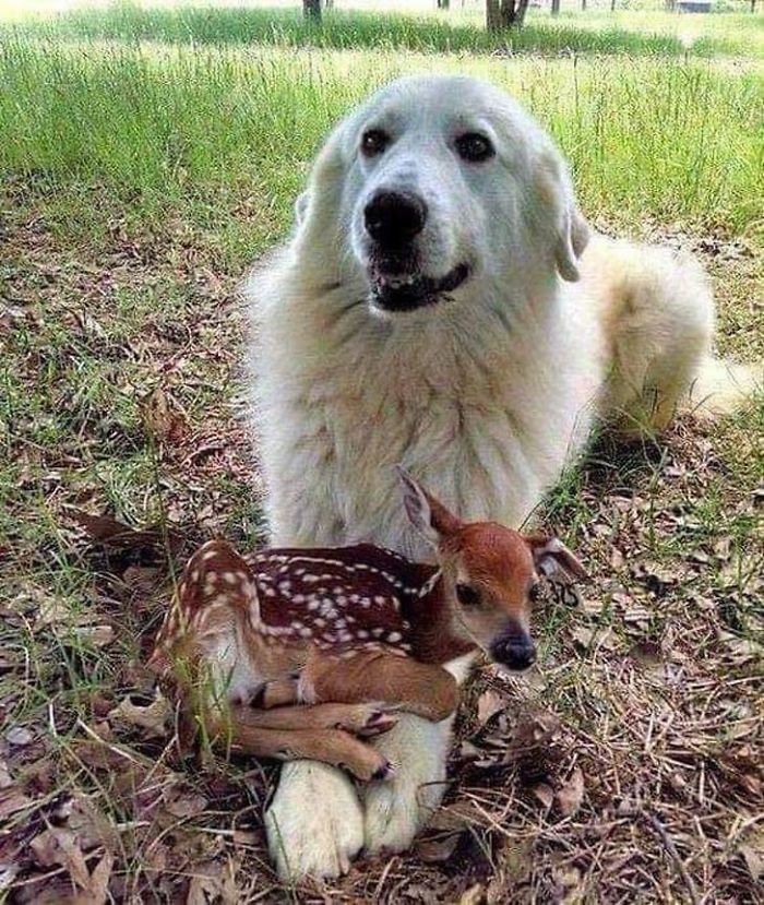 dog wants to adopt a fawn