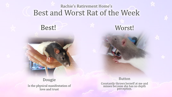 dougie and button as the best and worst rat for january 2020