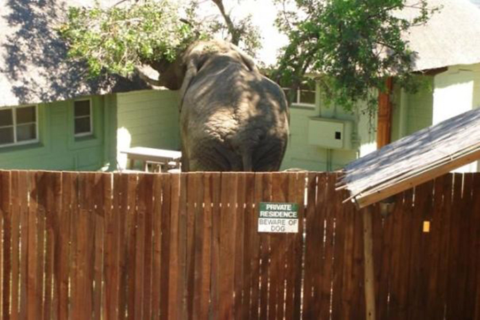 elephant behind warning sign