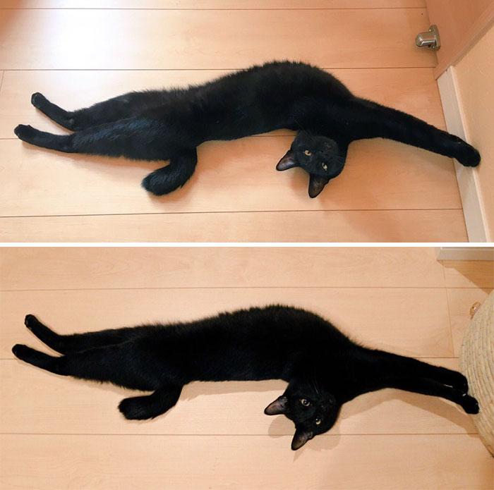 flexible kitties in hilarious positions elastic body