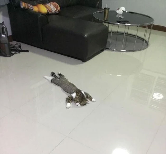 flexible kitties in hilarious positions floor mat