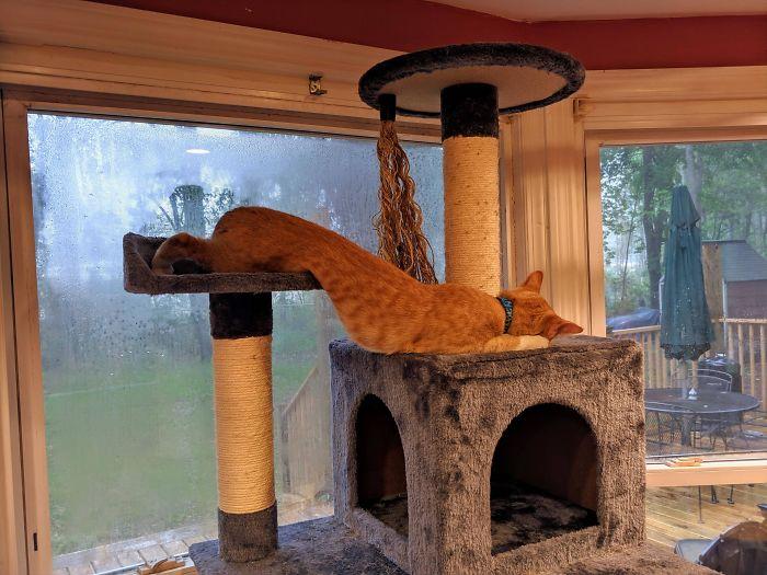 flexible kitties in hilarious positions head lower