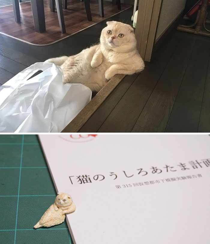 funny animal moment turned 3d chilling cat