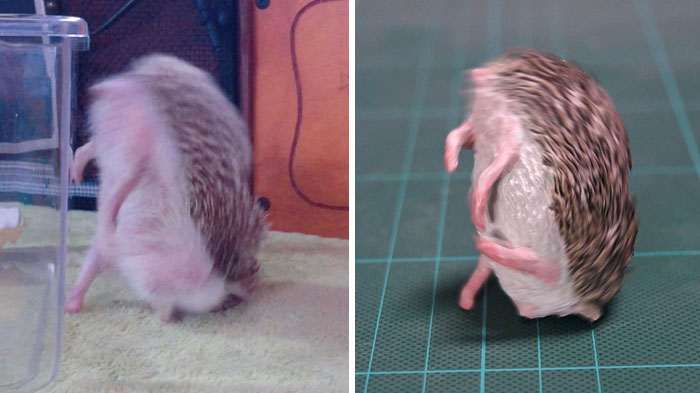 funny animal moment turned 3d hedgehog tripping