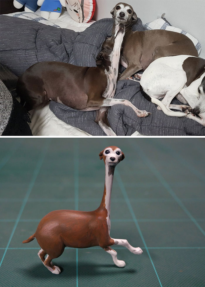 funny animal moment turned 3d long neck illusion