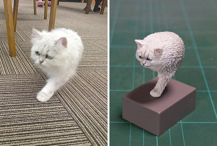 funny animal moment turned 3d single-foot cat