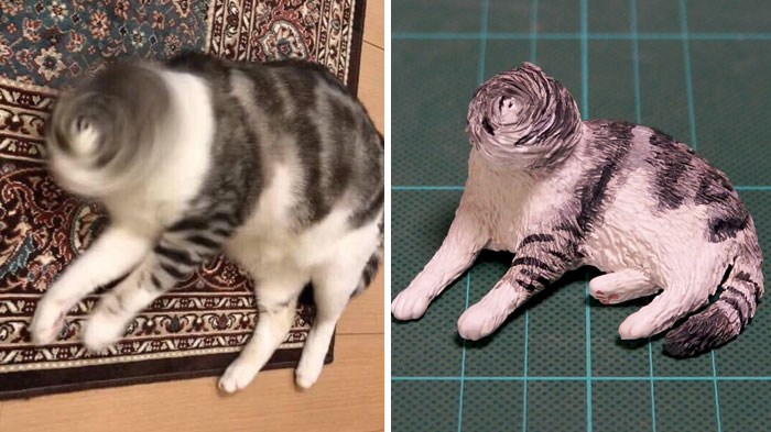 funny animal moment turned 3d spin head