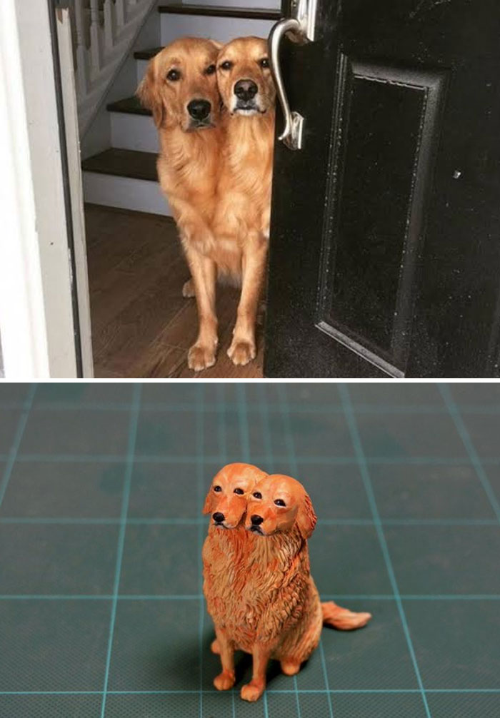 funny animal moment turned 3d two-headed dog