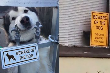funny beware of the dog signs