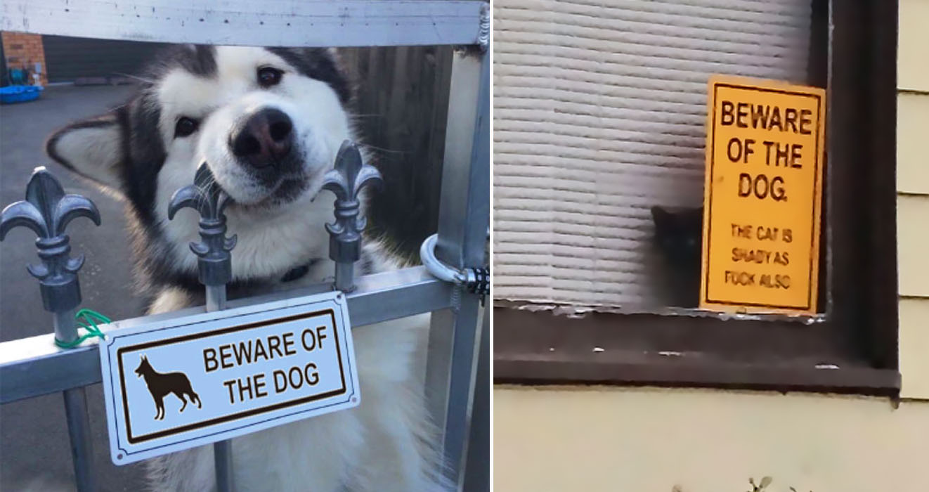 45 Dogs Behind The Beware Of The Dog Signs That Are Far From Dangerous
