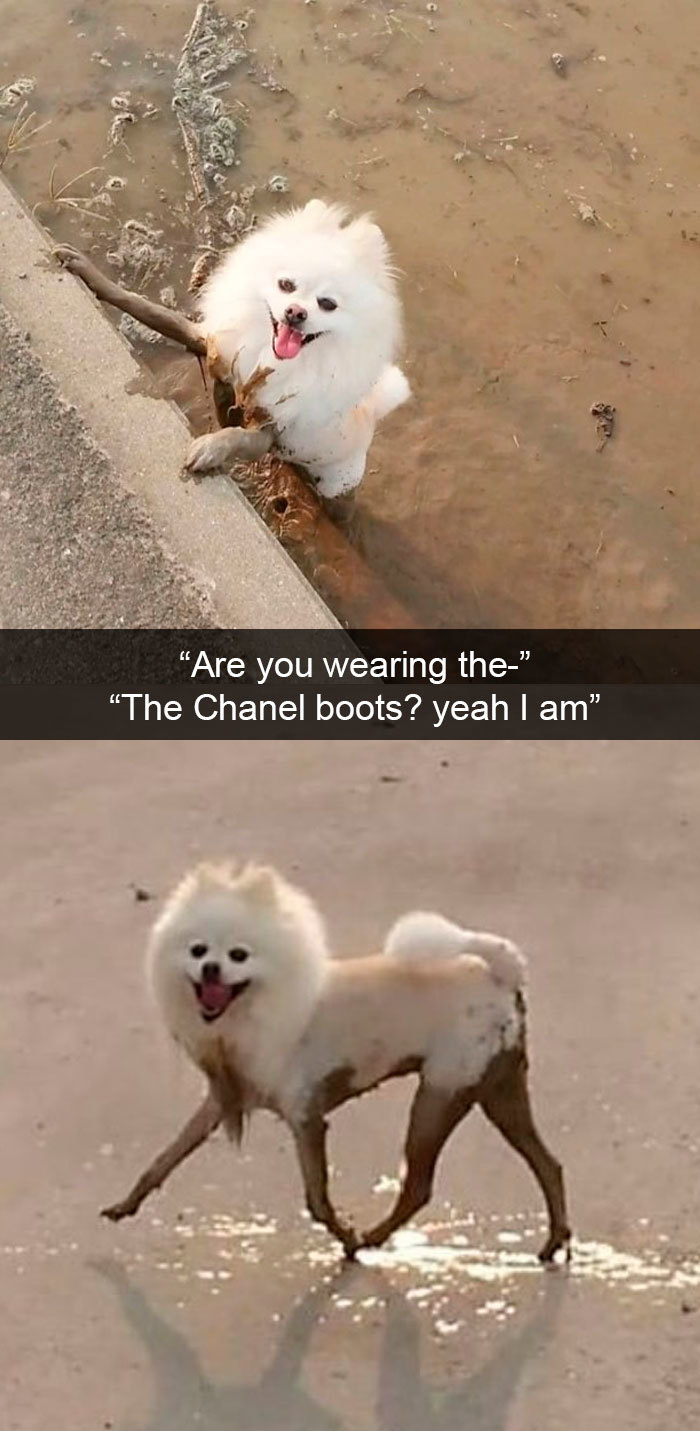 funny dog snapchats chanel boots