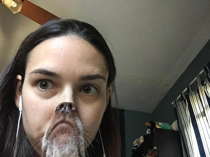 funny dog snapchats doggy snout