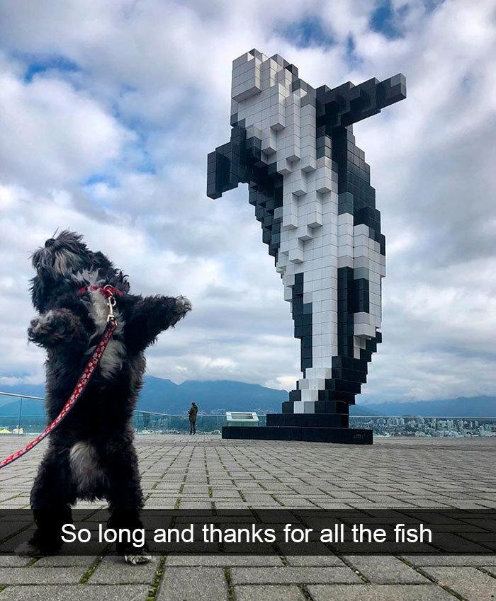 funny dog snapchats dolphin statue