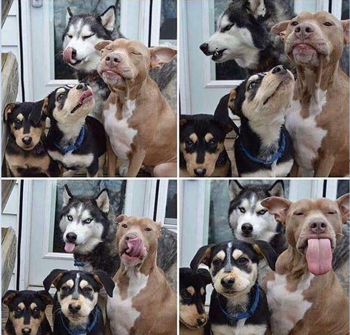 funny dog snapchats family photo